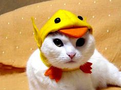 Happy Saturday! Here's a cat cosplaying a duck.