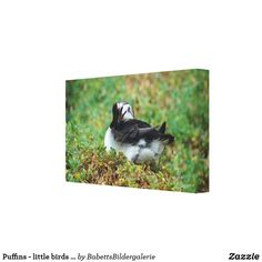 Puffins - little birds big leinwanddruck Little Birds, Big, Painting, Vacation Pictures, Animal Themes, Artworks, Canvas, Animales, Small Birds