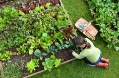 Learn More About 8 Steps To Organic Gardening  http://www.homesteadingfreedom.com/8-steps-to-organic-gardening/