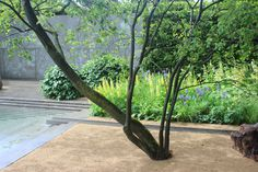 Luciano Giubbilei's Laurent-Perrier Garden after the rain Landscaping Tips, Garden Landscaping, Landscape Design, Garden Design, Laurent Perrier, Garden Architecture, Backyard Projects, Container Gardening, Herb Container