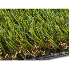 Find grass & grass seed at Lowe's today. Shop grass & grass seed and a variety of lawn & garden products online at Lowes.com. Artificial Grass Balcony, Artificial Turf, Growing Grass From Seed, Fescue Grass, Landscape Materials, Grass Seed, Lawn Care, Lawn And Garden, Ferns