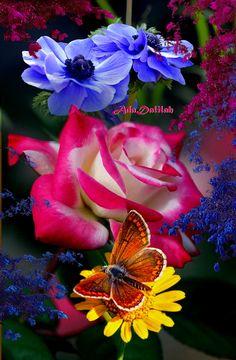 Beautiful Butterflies, Amazing Flowers, Beautiful Birds, Beautiful Flowers, Beautiful Pictures, Good Morning Flowers, Good Morning Greetings, Wedding Background, Photomontage