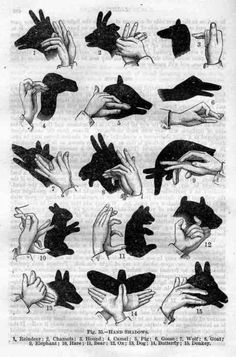 shadow animals, this would make awesome art in Leo's room :-)
