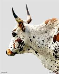 diy nguni trophy head - Google Search
