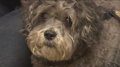 Senior dog adopted by rescue squad member after crash kills owner. how sad n pathetic that this mans family wouldnt keep n love his lil friend pic here .i bet he is disgusted with all of you ! Dog Stories, Types Of Animals, Animal Rescue, Dogs And Puppies, Squad, Adoption, Survival, Newspaper Article, Sunday Morning