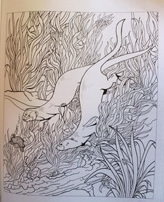 Amazon Creative Haven Animals A Coloring Book With Hidden Picture