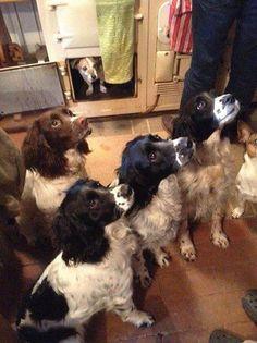 Agahuis: Honden voelen zich helemaal thuis bij de Aga..