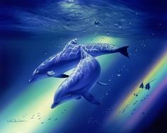 Rainbow Dolphins Photo by wld011 |