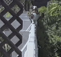 So I've been collecting cat gifs... - Imgur