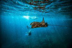 Scuba Diving Bali - Community - Google+