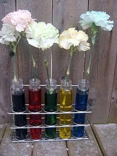 Science Experiment - cool to do with the kids in the fall for learning colors - have it on display at circle-time -- do again in the spring when flowers are blooming and let's see what they are going to do -- maybe the kids can do their own colored carnation with mixing colors and observing what they created appear - take home to mom, etc...... :)