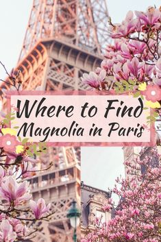Where to find the very best Magnolia trees in Paris. In search of spring in the French capital, Paris, France. Eiffel Tower, Hôtel de Ville and more locations to see spring blossom in Europe!