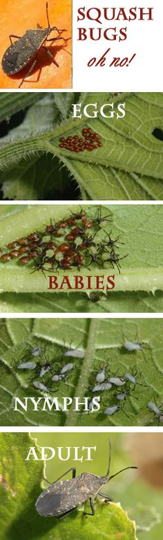 how to keep bugs off vegetable plants