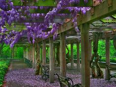 Central Park, Conservatory Garden: Wisteria Pergola - possibly one of my favorite places in the entire city Corner Pergola, Small Pergola, Outdoor Pergola, Pergola Lighting, Pergola Plans, Pergola Ideas, Pergola Carport, Pergola Swing, Outdoor Areas