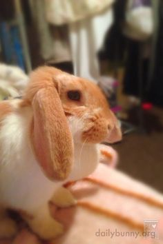Bunny, you look pensive. What's on your mind? - June 7, 2017