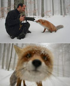 """We all admire those wildlife photographers who go to the untamed jungles and savannas to take pictures of the animals. But have you ever thought of a real """"wildlife"""" photographers? That means animals take the pictures. Animals And Pets, Baby Animals, Funny Animals, Cute Animals, Wild Animals, Cute Creatures, Beautiful Creatures, Animals Beautiful, Tier Fotos"""