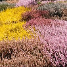 Heathers are an easy way to add color to any yard in any climate! These easy to grow, low-maintenance plants are an excellent addition to your landscaping plan. Find out the best time to plant them and how to make them thrive in any type of garden.