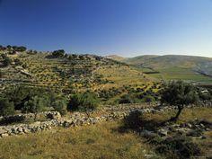 Shepherd's Fields, Bethlehem