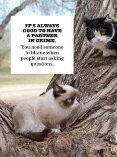 Grumpy Cat's 'Guide to Life' Coming to Bookshelves - July 2014