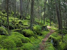 Baxter Creek Trail - 11 North American Hikes For Your Bucket List