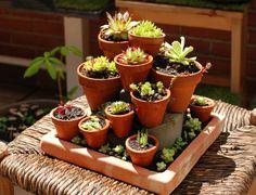 No Linde - Incremental Mini-Gardens Mini Cactus Garden, Succulent Gardening, Succulent Terrarium, Cactus Flower, Container Gardening, Succulents In Containers, Cacti And Succulents, Planting Succulents, Planting Flowers