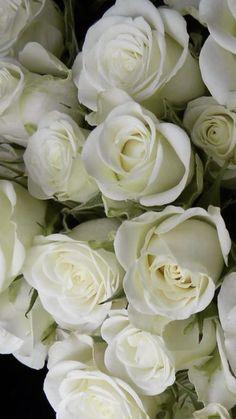 Where To Buy Flowers, All Flowers, Wedding Flowers, White Spray Roses, Flowers Wholesale, Popular Flowers, Star Of Bethlehem, Seeded Eucalyptus, Manzanita
