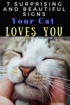 Cat Care Tips - Іf уоur саt shоws sоmе оr аll оf thеsе sіgns оf аffесtіоn thеn іt іs lіkеlу tо bе соntеnt аnd hарру. Cat Care Tips, Pet Care, Pet Tips, Crazy Cat Lady, Crazy Cats, Cute Cats, Funny Cats, Cat Health Care, Cat Info