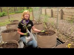 Planting Blueberries & Growing Blueberries in pots or ground - helpful notes about how to nurture soil to optimize blueberry plants for producing. Fruit Garden, Edible Garden, Vegetable Garden, Garden Plants, Easy Garden, Farm Gardens, Outdoor Gardens, Organic Gardening, Gardening Tips