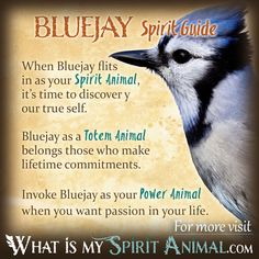 Get in-depth Bluejay Symbolism & Meanings! Bluejay as a Spirit, Totem, & Power Animal. Plus, Bluejay in Celtic & Native American Symbols and Dreams! Spirit Animal Totem, Animal Spirit Guides, Your Spirit Animal, Native American Animals, Native American Symbols, American Indians, Animal Meanings, Animal Symbolism, Power Animal