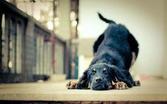 """Anyone who has ever had a dog can agree they're family. But sometimes, when we get frustrated with them, it can be easy to forget. These """"Canine Commandments"""" will really make you think about the important role we play in our dogs' lives."""