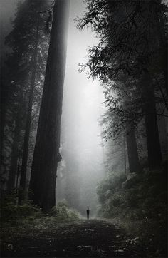 """Lost in the Old Growth"" by Peter Jamus on Flickr - a very, very dark forest green"