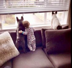 A Baby and French Bulldogs, perfection