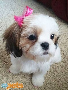 One cute little bitch!