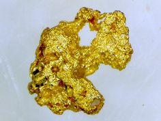 Or (de placer). Gominot, Bort les Orgues, Auvergne, France. Taille=1.5 mm Photo et collection Patrick Bartholomew