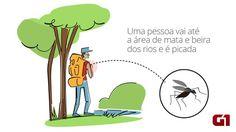 Instituto Evandro Chagas já confirmou febre amarela em macacos de 6 estados este ano