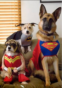 OMG!! I love the Wonderwoman costume!! I actually have the same one for my dog!!
