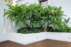 swanbourne landscape design by janine-mendel - cultivart Bali Garden, Garden Beds, Garden Plants, Landscape Design, Garden Design, House Design, Retaining Wall Design, Outdoor Entertaining, Backyard Landscaping