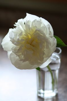 i don't think you can look at a flower's petals and not see the gentle grace of it's Creator.