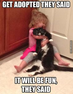 Get #adopted they said, it will be #fun they said. #LetsGetWordy #caturday