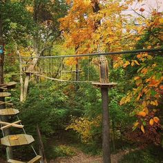 Can one share too many pics of gorgeous fall foliage? We think not. Adventure with us this weekend before all the leaves have fallen. Book now at www.goape.com.
