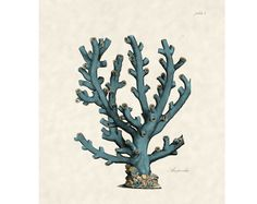 Beach Decor Antique Sea Fan Coral Print for Coastal Wall Decor plate7. $10.00, via Etsy.