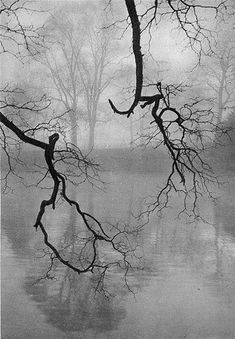 37 Ideas For Vintage Nature Photography Rain Black White Vintage Nature Photography, Art Photography, Black White Photos, Black And White Photography, Foto Nature, Belle Photo, Great Photos, Mists, Beautiful Pictures