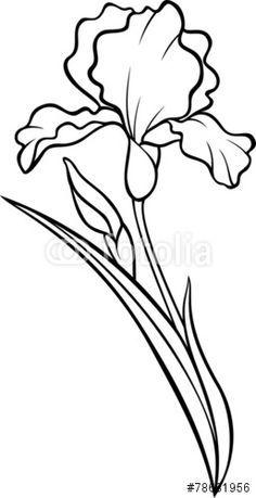 Drawn Iris Simple Pencil And In Color Drawn Iris Simple 236x459 Jpeg Iris Painting Flower Silhouette Iris Drawing