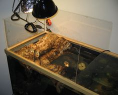 Diy Turtle Topper Aquariums Pinterest Turtles