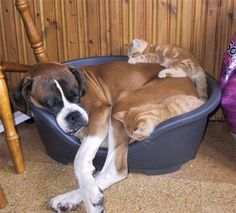 Don't think this bed is made for three!!