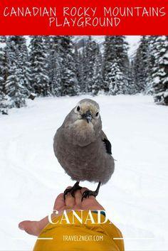 Canadian Rocky Mountains playground. In November 2014 Katie Goldie @goldiehawn_ had 5000 Instagram followers.