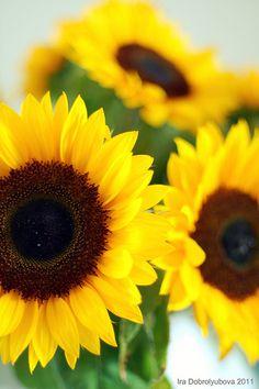 Sunflowers for Sara!