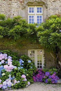 English Country garden hydrangeas