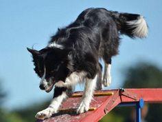Você pretende adotar ou comprar um cachorro de estimação, mas tem dúvidas sobre a raça ideal para viver em sua casa?