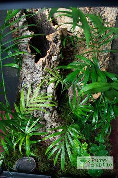 inkfactorystudio: Build your own terrarium! inkfactorystudio: Build your own terrarium! Terrariums, Tree Frog Terrarium, Gecko Terrarium, Terrarium Reptile, Aquarium Terrarium, Tarantula Habitat, Tarantula Enclosure, Gecko Habitat, Reptile Enclosure